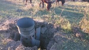 rocket_and cows_Dmitrovka